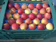 Яблоки из Польши прямые поставки